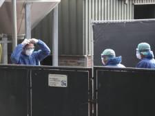 Ruiming eerste nertsenbedrijf gestart, duizenden dieren vergast