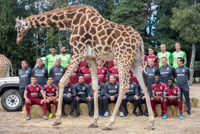 Een giraffe passeert de fotograaf als de selectie van Vitesse poseert tussen de dieren van het safaripark van Koninklijke Burgers' Zoo in Arnhem, samen met het Nederlands Openluchtmuseum hoofdsponsor van de club.