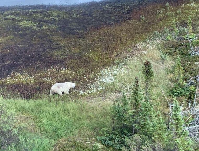 De politie wijst in haar bericht op de dreiging van een ijsbeeraanval tijdens de zoekactie.