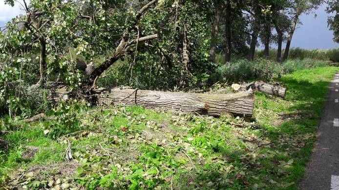 De boom langs de Haardijk in Linschoten viel zaterdagmiddag op een voorbij rijdende fietser die hierdoor overleed.