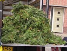 Hennepkwekerij opgerold in hoekwoning in Enschede