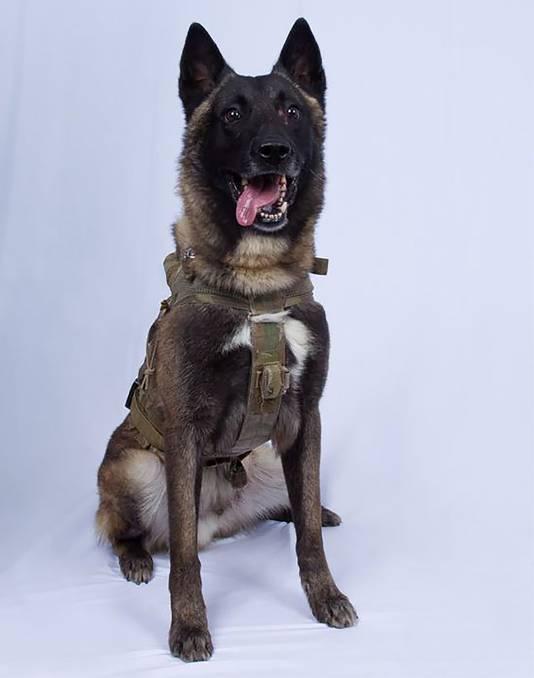 De militaire hond die een belangrijke rol speelde in de missie waarbij IS-leider al-Baghdadi zichzelf opblies.