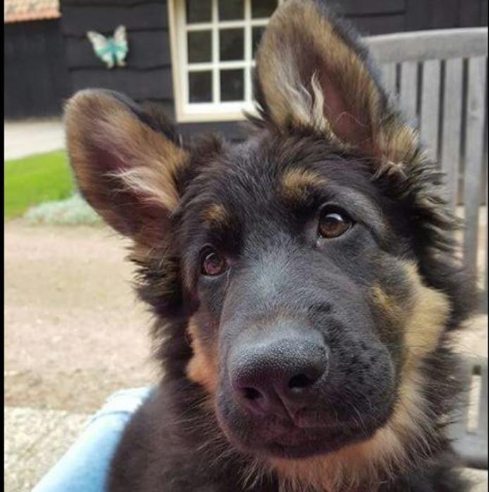 De pup voor de vermissing. Eigen foto