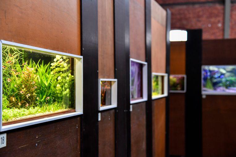 De aquarium- en terrariumtentoonstelling van Betta biedt zicht op meer dan zestig pareltjes.