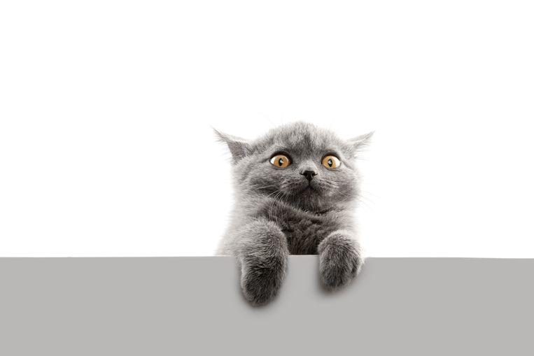 De gemeente kent een subsidie toe voor de sterilisatie van huiskatten.