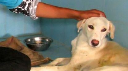 Ontroerende beelden: straathond na uren gered uit diepe waterput in India