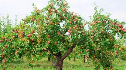 Wetteren schenkt 100 fruitbomen weg