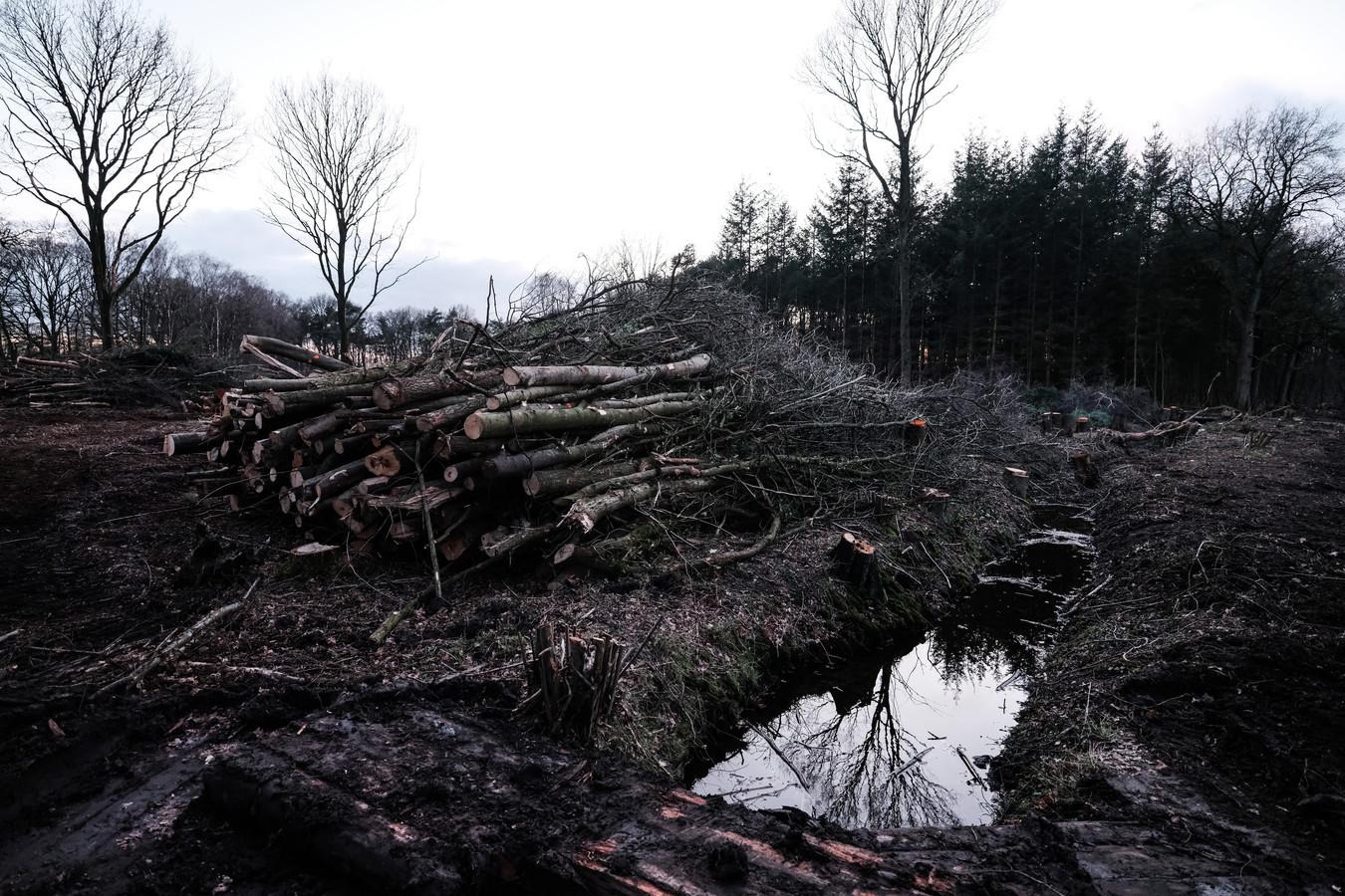 In het Natura 2000 gebied Willinks Weust worden momenteel duizenden bomen gekapt voor het herstel van natuurwaarden.