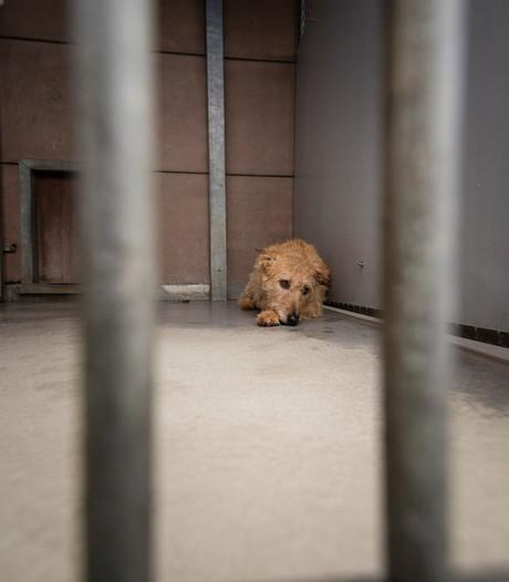 Almeloos asiel doet alles voor een hond als Cara