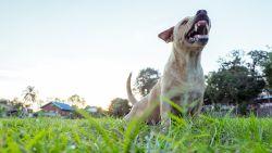 FAVV waarschuwt voor hondsdolheid op vakantie