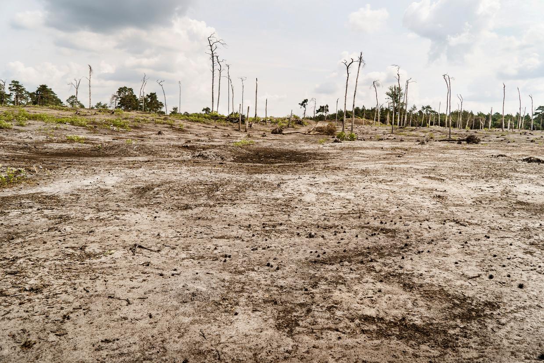 De Kalmthoutse heide. Zelfs de natuurgebieden kreunen onder de druk van klimaatverandering, stikstofafzetting en versnippering. Logisch dat de planten- en diersoorten krijgen het steeds moeilijker krijgen.