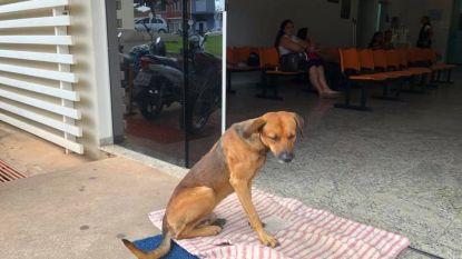 Trouwe hond wil niet weg uit ziekenhuis waar baasje vier maanden geleden stierf