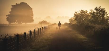 Plaatselijk dichte mist op de Veluwe