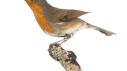 Natuurpunt organiseert Vroege vogel wandeling