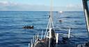 Duikers van de marine tijdens de zoekactie naar de vermiste vissers uit Urk.