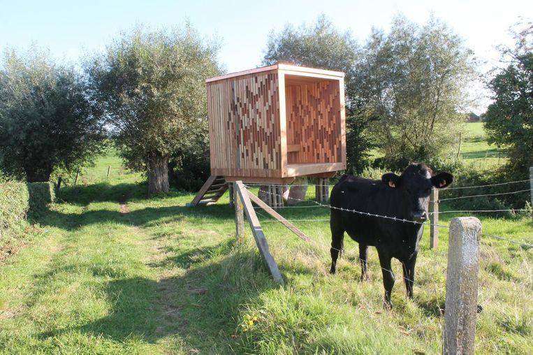 De landschapskubus moet de aandacht van wandelaars trekken. Koeien lijken echter minder geïnteresseerd.