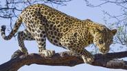 Luipaard verscheurt Indiaas jongetje (5) onderweg naar toilet