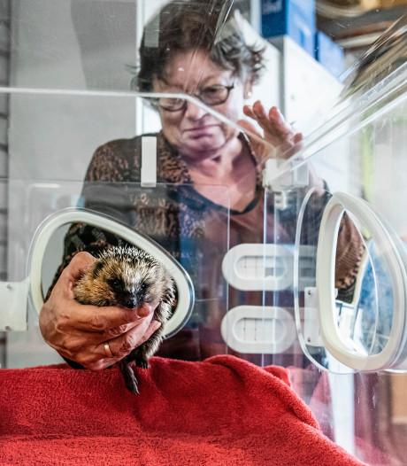 Egelopvang en rijdende knuffelboerderij krijgen duizenden euro's: 'veel meer dan gehoopt'