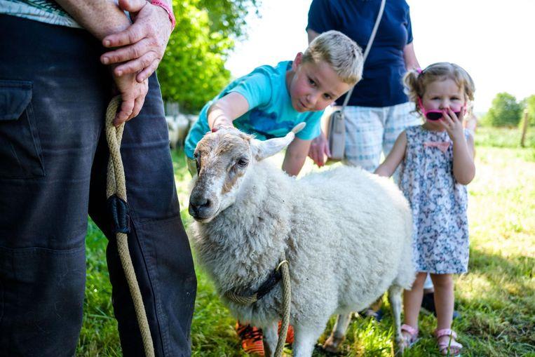 Een schaap laat zich gewillig strelen door een jongen.
