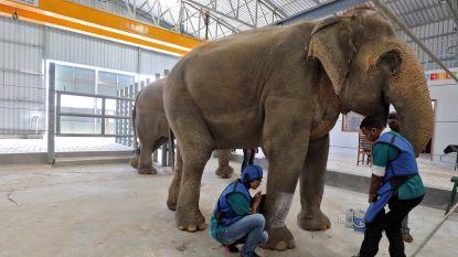 India opent eerste olifantenziekenhuis
