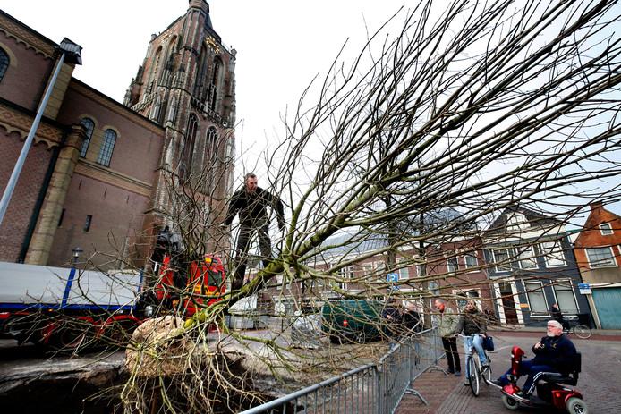 Het planten van een boom Achter de Kerk.