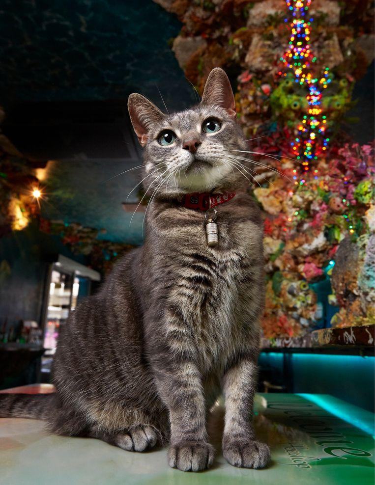 Mimi (8 of 9, onbekend), huiskat, Centrum. Beeld Isabella Rozendaal