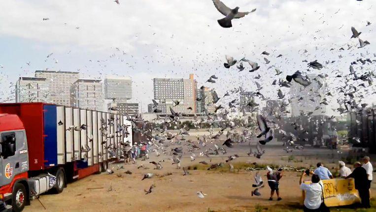 De 'Tour de France' van de duivensport was dit jaar een slagveld | De  Volkskrant