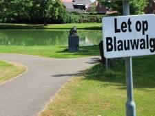 Blauwalg in Langbroek: niet zwemmen in de vijver bij de Mauritsdreef