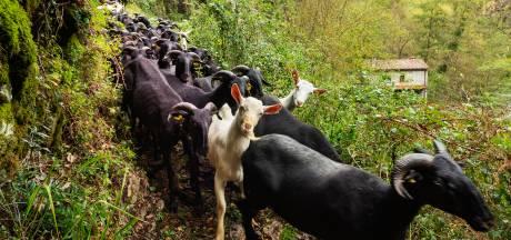 Houd je van wandelen? Trek eens met een kudde schapen door de Toscaanse bergen