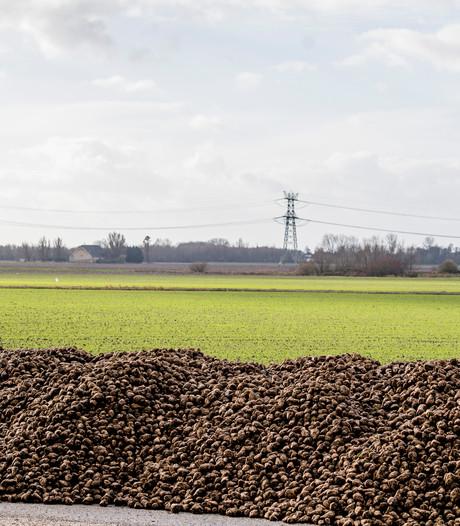 Droge lente zorgt voor recordoogst suikerbieten