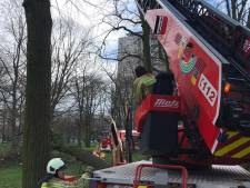 Storm Dennis  zorgt voor 100 oproepen in Antwerpen