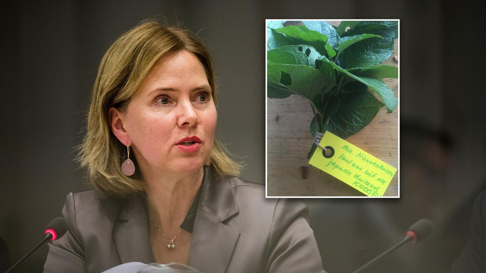 Minister Cora van Nieuwenhuizen van Verkeer. Inzet: het boeketje met de Japanse Duizendknoop