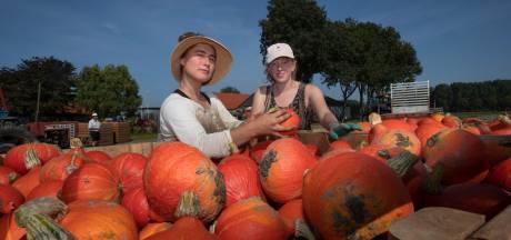 Zonder werk door corona, dan maar bijbeunen bij de boer: 'Ik voel spieren die ik al lang niet meer heb gevoeld'