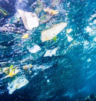 Gaat de natuur ons een handje helpen om plastic afval op te ruimen? En is dat goed nieuws of juist niet?