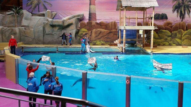 De activisten sprongen tijdens de dolfijnenshow in het water en ontrolden enkele spandoeken.