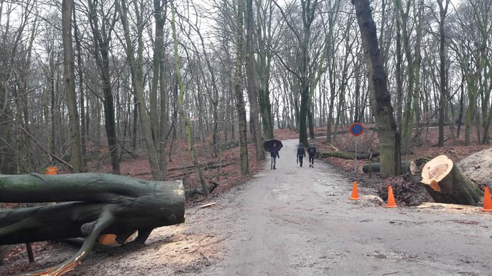 Wandelaars en door de storm gevelde bomen in het bos op de Duivelsberg.