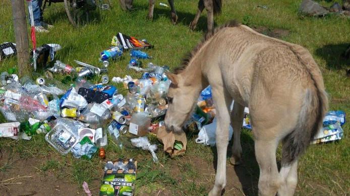 Een veulen kijkt of er nog wat eten te vinden is tussen het afval.