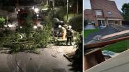 Hier en daar in Vlaanderen bomen omgewaaid, maar schade door storm Francis blijft beperkt