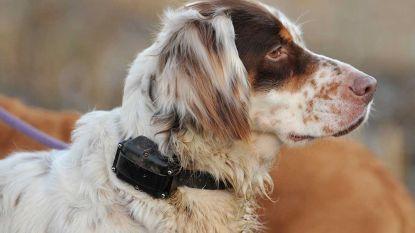"""Blauwe Kruis dient jagers van antwoord: """"Stroomhalsbanden voor honden zijn pure marteltuigen. Punt."""""""