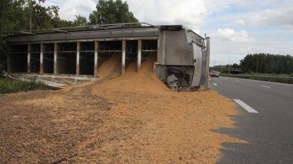 Vrachtwagen met veevoeder gekanteld op E403 in Moorsele