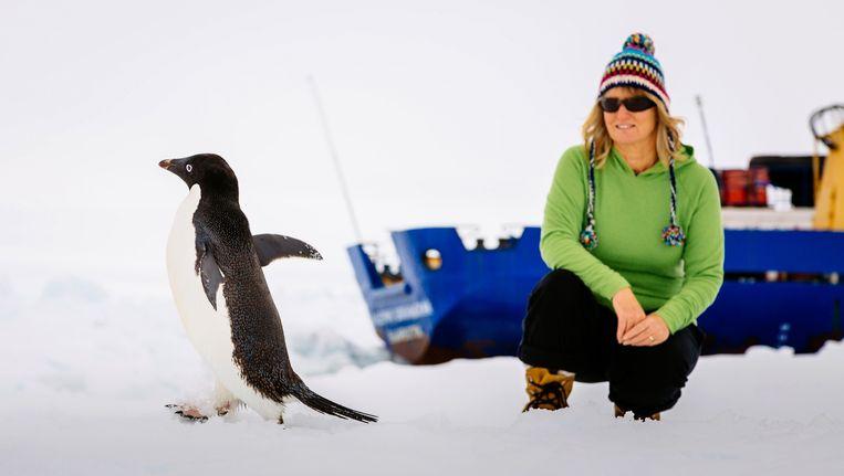 Een passagier van de Akademik Sjokalski kijkt naar een passerende Adelie-pinguin. Beeld REUTERS