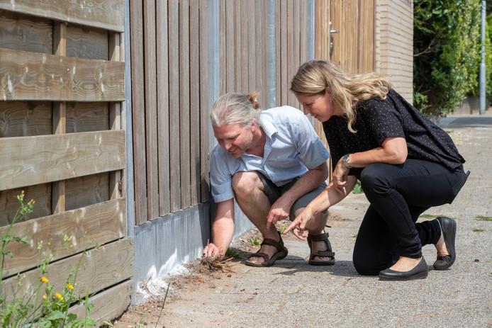Dit is hoe de 'dracula-mier' toeslaat in je tuin