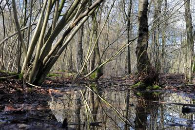 Miljoenen voor oppeppen Brabantse natuur