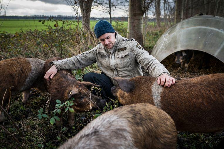 De varkens van boer William Hempen onderhouden met hun gewroet een bosje langs de weg. Beeld Kees van de Veen