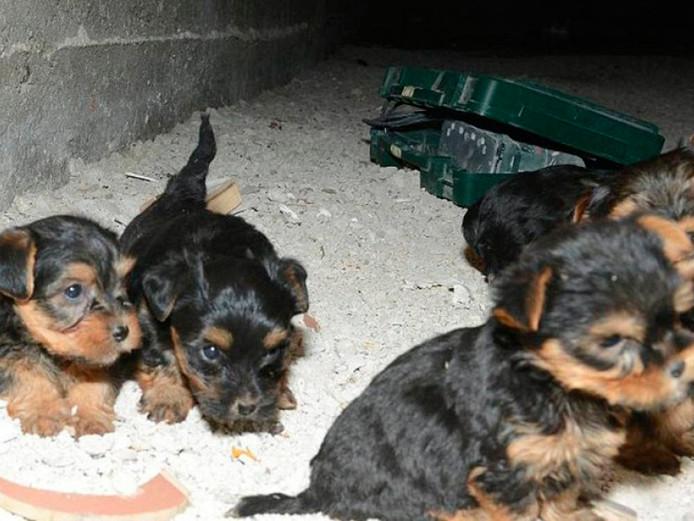 Hondenhandel