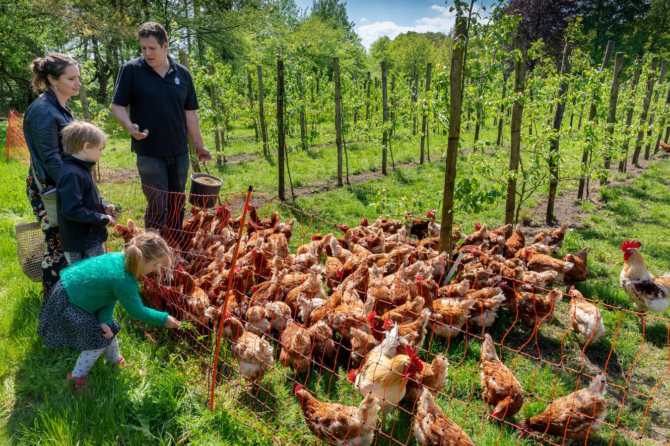 Jetske Thielen en kinderen worden voorgelicht door boer Geert van der Bruggen op de boerderij in Boxtel waar op een eerlijke manier en verantwoord wordt geboerd.