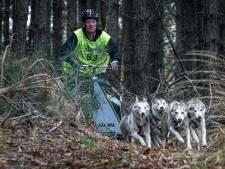 Een roedel sledehonden is zo snel als de zwakste hond