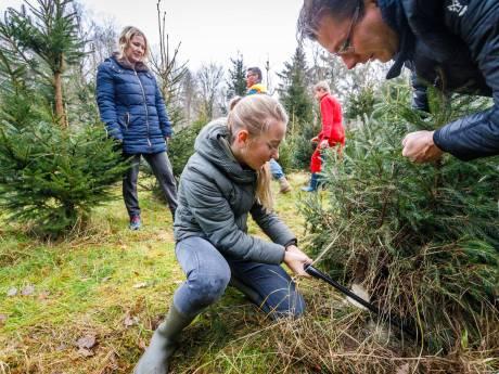 Zelf een kerstboom in Kuinderbos afzagen vinden vooral jonge gezinnen het leukste wat er is