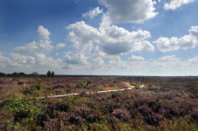 Het grootste aaneengesloten droge heidegebied van Noordwest-Europa wordt nog groter. foto: Lenneke Lingmont
