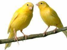 Hengelose vogelliefhebber is nu Ridder